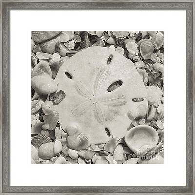 Square Sepia Sand Dollar Framed Print
