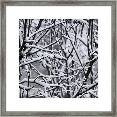 Square Snowy Branches Framed Print by Birgit Tyrrell