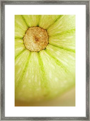 Squash (cucurbita Pepo) Framed Print by Maria Mosolova/science Photo Library