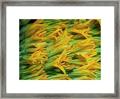 Squash Leaves Are A Treat In Springtime Framed Print