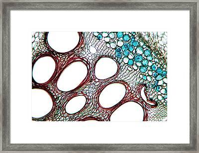 Squash Stem Framed Print