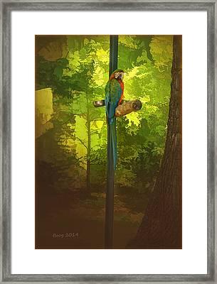 Squawk Box Framed Print by Larry Bishop
