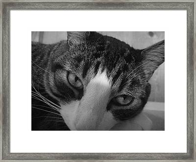 Squeak In Wonder And Thought Framed Print by James Rishel
