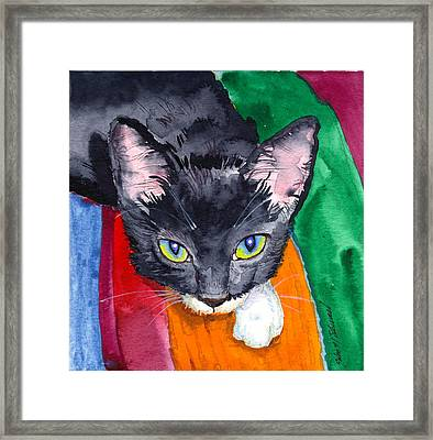 Squeak The Wonder Cat Framed Print