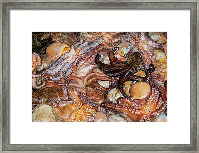 Squid For Sale In The Modern Fish Framed Print by Michael Runkel
