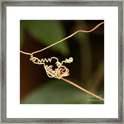 Squiggles Framed Print by Sabrina L Ryan