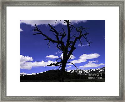 Framed Print featuring the photograph Squigly Tree by Janice Westerberg