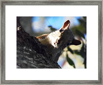 Framed Print featuring the photograph Squirrel 003 by Chris Mercer