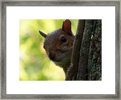 Framed Print featuring the photograph Squirrel 025  by Chris Mercer