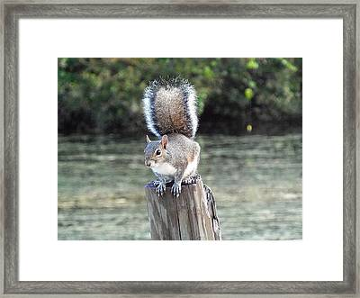 Framed Print featuring the photograph Squirrel 035 by Chris Mercer