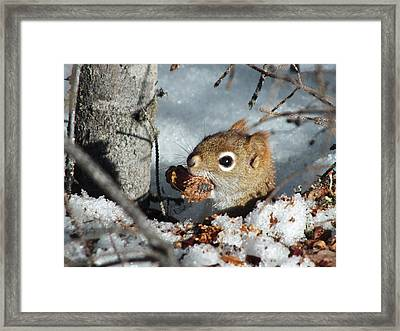 Squirrel 2 Framed Print