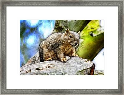 Squirrel - 8379- F - S Framed Print by James Ahn