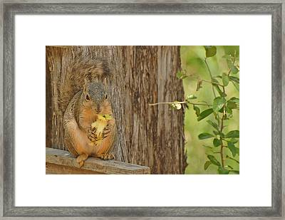 Framed Print featuring the photograph Squirrel And Apple by Susan D Moody
