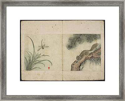 Squirrel And Dragonfly Framed Print by British Library