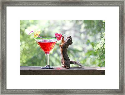 Squirrel At Cocktail Hour Framed Print