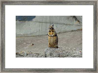 Squirrel At Lover's Point  Framed Print
