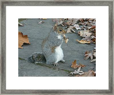 Squirrel Chomping On Bread Framed Print