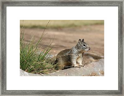 Framed Print featuring the photograph The Beggar  by Christy Pooschke