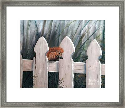 Squirrel Dining On Pine Framed Print by Stephen Schaps