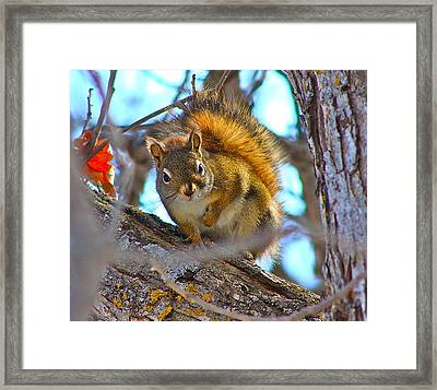 Squirrel Duty. Framed Print