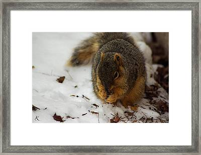 Squirrel Eating Framed Print