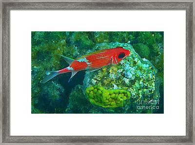 Squirrel Fish Framed Print