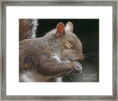 Squirrel Giving Thanks Framed Print
