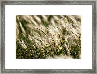Framed Print featuring the photograph Squirrel Grass by Fran Riley