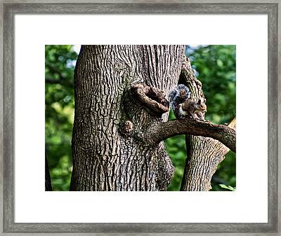 Squirrel Guarding Watering Knot Framed Print by Chris Flees