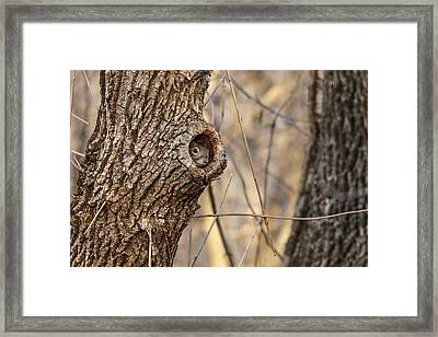 Squirrel Hole Framed Print by Jill Bell