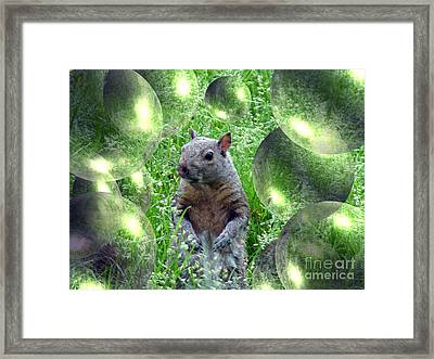 Squirrel In Bubbles Framed Print