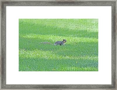 Framed Print featuring the photograph Squirrel In Grass by Lorna Rogers Photography