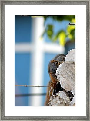 Squirrel In Hiding Framed Print