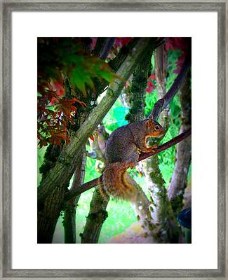 Squirrel In My Tree Framed Print