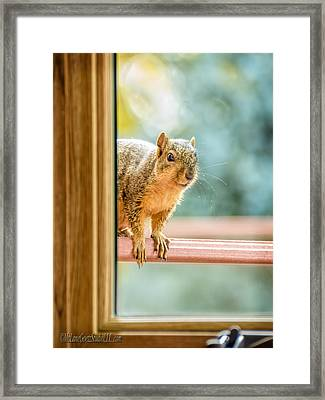 Squirrel In The Window Framed Print by LeeAnn McLaneGoetz McLaneGoetzStudioLLCcom