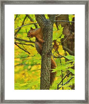 Squirrel In The Woods 2 Oil Framed Print