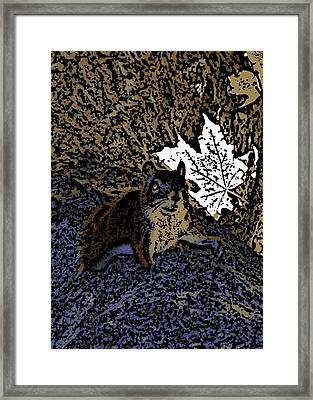 Squirrel Framed Print by Jason Lees