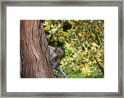 Framed Print featuring the photograph Squirrel by Kate Brown