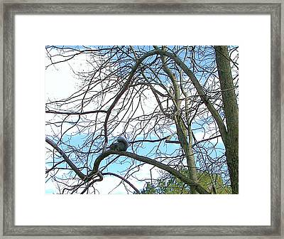 Framed Print featuring the photograph Squirrel Maze by Pamela Hyde Wilson