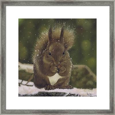 Squirrel Nutkin Framed Print