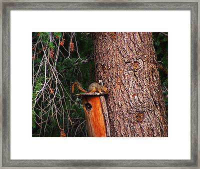Squirrel On Top Of Birdhouse Framed Print by Chris Flees