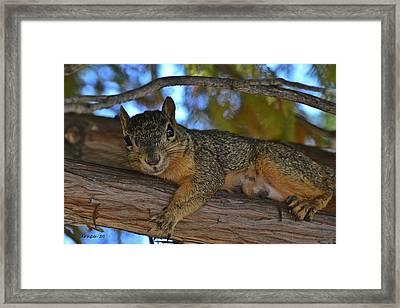 Squirrel On Watch Framed Print