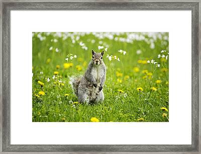 Squirrel Patrol Framed Print