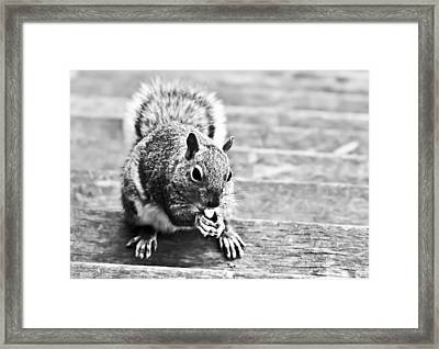 Squirrel Framed Print by Paulina Szajek