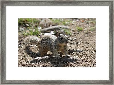 Squirrel Play  Framed Print