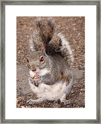 Squirrel Possessed Framed Print by Rona Black
