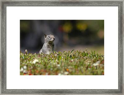 Framed Print featuring the photograph Spy Squirrel  by Richard Stephen