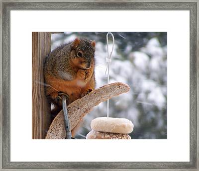 Squirrel Snack II Framed Print by Jim Finch