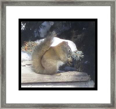 Squirrel Three Framed Print by Cathy Long