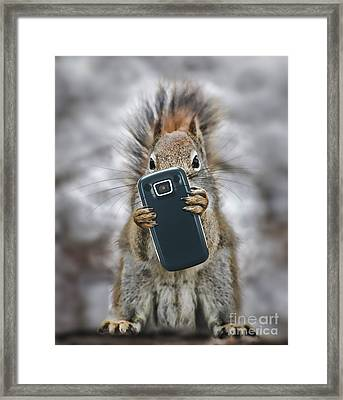 Squirrel With Cellphone Framed Print by Mike Agliolo